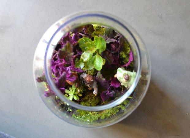 Etape 3 : Disposez les plantes et les figurines selon votre inspiration du moment. Les différentes sortes de mousse viennent agrémenter votre composition.